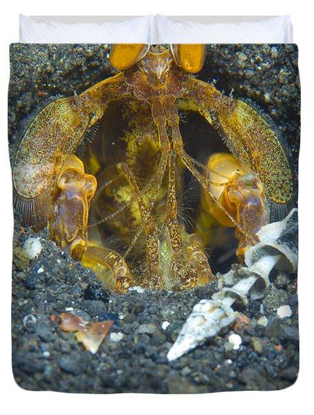 Orange Mantis Shrimp In Its Burrow Duvet Cover by Steve Jones