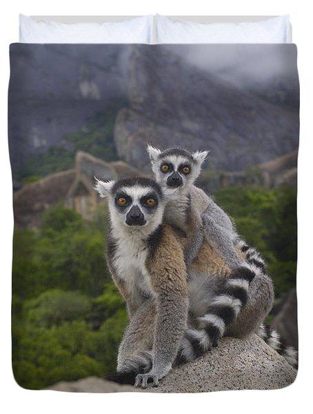 Ring-tailed Lemur Lemur Catta Mother Duvet Cover by Pete Oxford