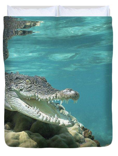 Saltwater Crocodile Crocodylus Porosus Duvet Cover by Mike Parry