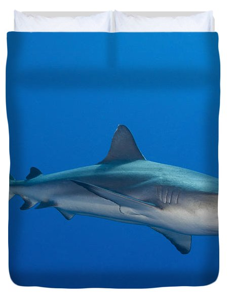 Gray Reef Shark, Kimbe Bay, Papua New Duvet Cover by Steve Jones