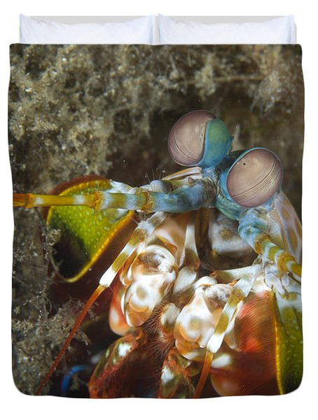 Close-up View Of A Mantis Shrimp, Papua Duvet Cover by Steve Jones