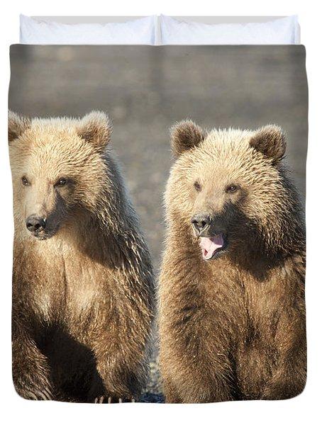 Grizzly Bear Ursus Arctos Horribilis Duvet Cover by Matthias Breiter