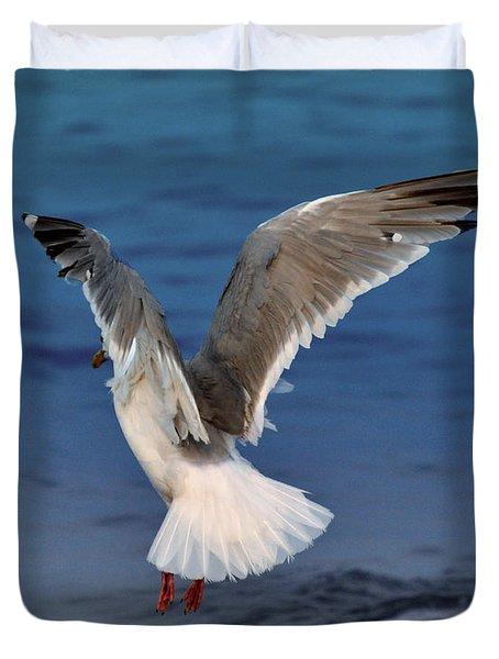 Seagull  Duvet Cover by Debra  Miller