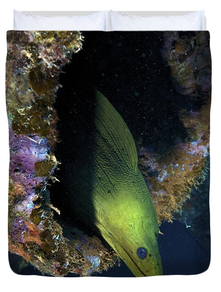 A Large Green Moray Eel Duvet Cover by Terry Moore