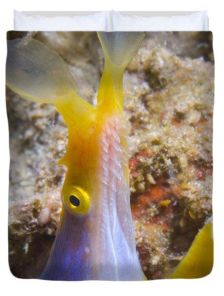 A Male Ribbon Eel Peering Duvet Cover by Steve Jones