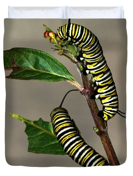 A Pair Of Monarch Caterpillars Duvet Cover by Sabrina L Ryan