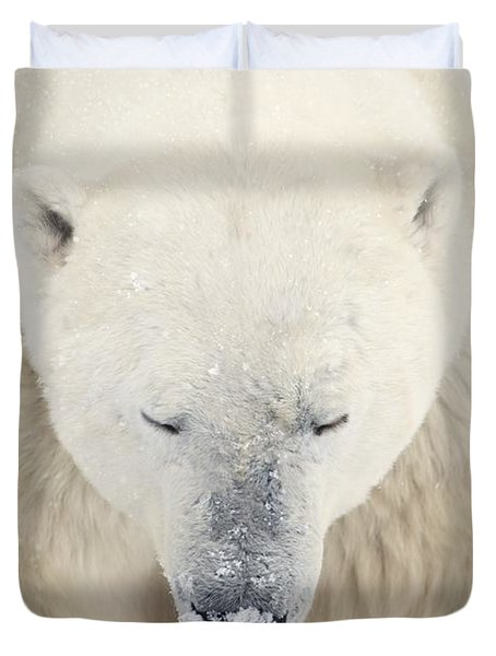 A Polar Bear Ursus Maritimus Resting Duvet Cover by Richard Wear