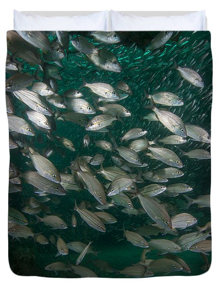 A School Of Tomtate And Glass Minnows Duvet Cover by Michael Wood