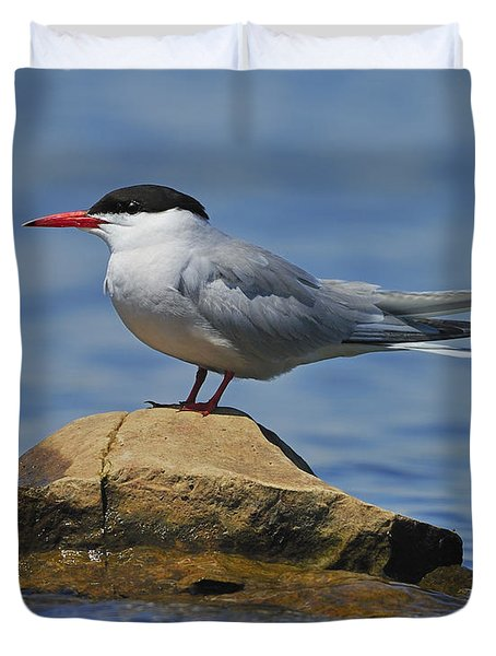 Adult Common Tern Duvet Cover by Tony Beck