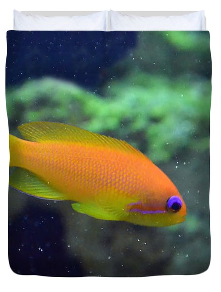 African Anthias Duvet Cover by Sandi OReilly