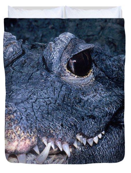 African Dwarf Crocodile Duvet Cover by Dante Fenolio