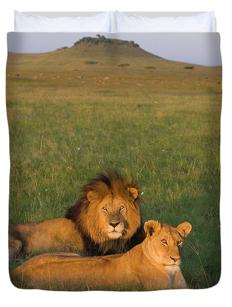 African Lion Panthera Leo Male Duvet Cover by Suzi Eszterhas