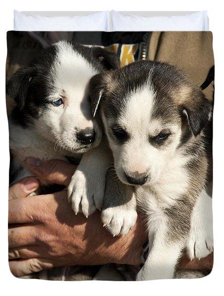 Alaskan Huskey Puppies Duvet Cover by John Greim