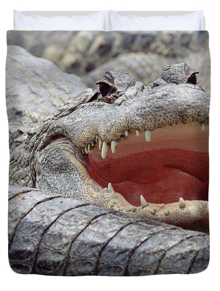 American Alligator Alligator Duvet Cover by Tim Fitzharris