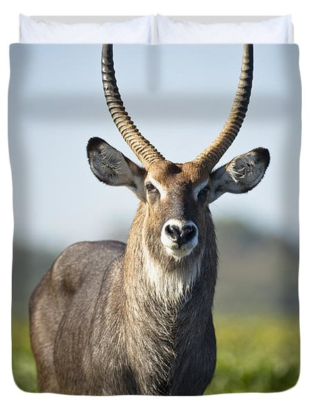 An Antelope Standing In Shallow Water Duvet Cover by David DuChemin