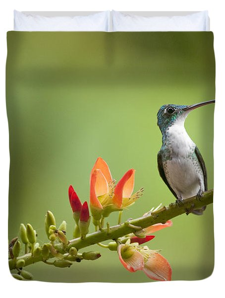 Andean Emerald Amazilia Franciae Duvet Cover by Murray Cooper