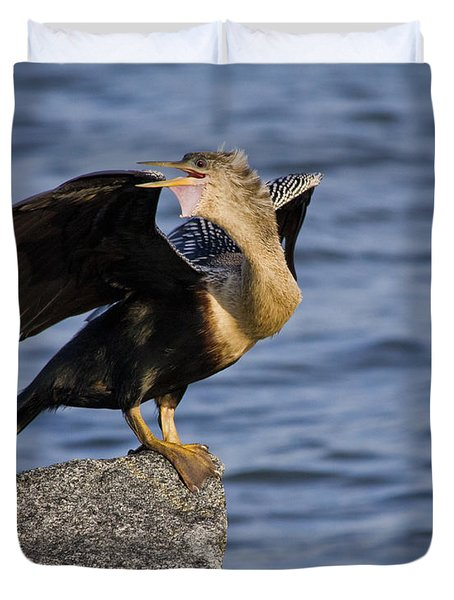 Anhinga Looking Back Duvet Cover by Roger Wedegis