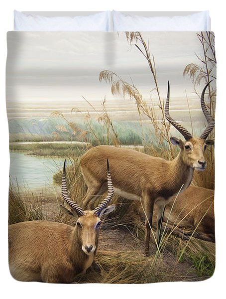 Antelope In The Grass Near The River Duvet Cover by Laura Ciapponi