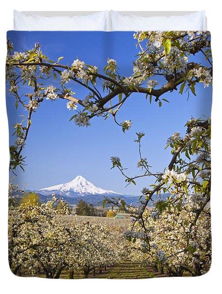 Apple Blossom Trees In Hood River Duvet Cover by Craig Tuttle