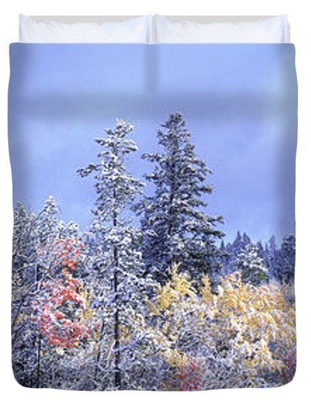 Aspens In Fall With Snow, Near 100 Mile Duvet Cover by David Nunuk