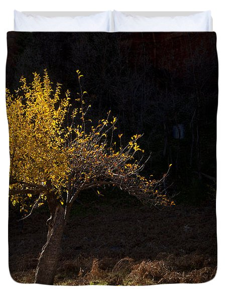 Autumn Light Duvet Cover by Mike  Dawson