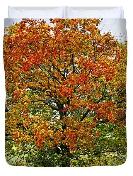 Autumn Maple Tree Duvet Cover by Elena Elisseeva
