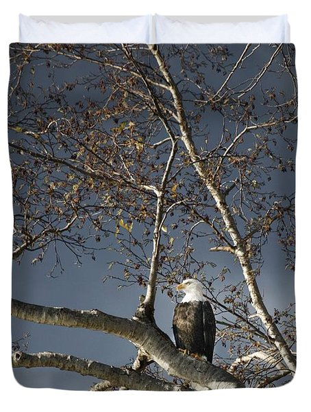 Bald Eagle In A Tree Duvet Cover by Con Tanasiuk