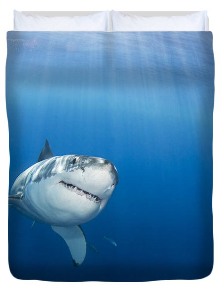 Beautiful Great White Duvet Cover by Dave Fleetham - Printscapes