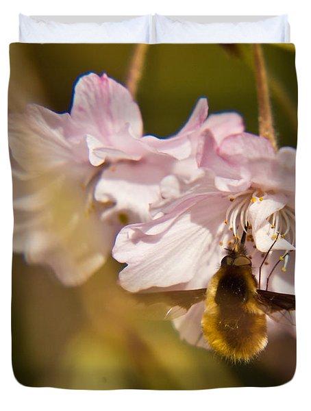 Bee Fly Feeding 1 Duvet Cover by Douglas Barnett