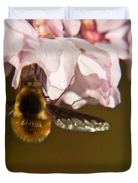 Bee Fly Feeding 5 Duvet Cover by Douglas Barnett