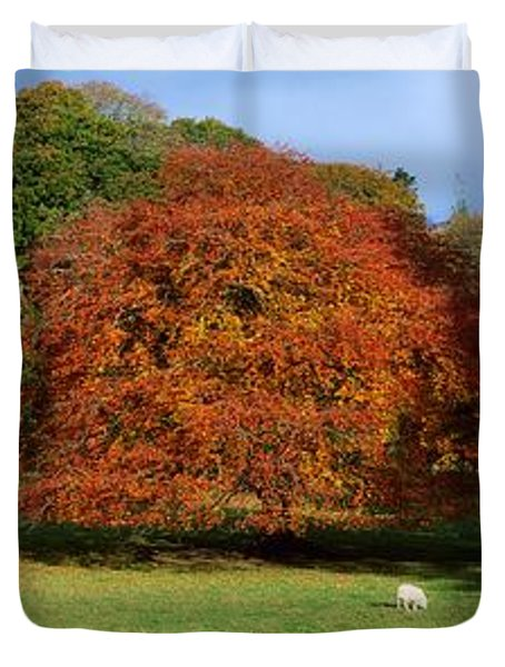 Beech Tree, Glendalough, Co Wicklow Duvet Cover by The Irish Image Collection