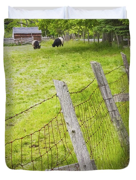 Belted Galloway Cows Farm Rockport Maine Duvet Cover by Keith Webber Jr