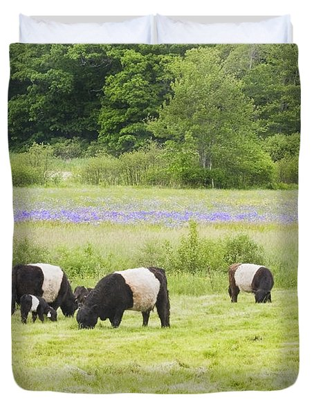 Belted Galloway Cows Pasture Rockport Maine Photograph Duvet Cover by Keith Webber Jr