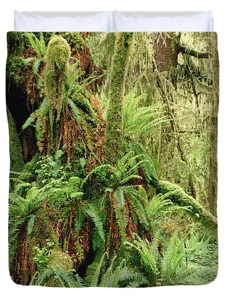 Bigleaf Maple Acer Macrophyllum Trees Duvet Cover by Gerry Ellis