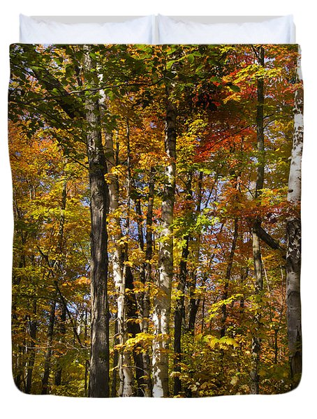 Birch Trail Duvet Cover by Jo-Anne Gazo-McKim