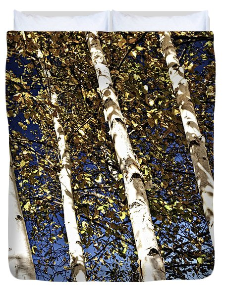 Birch trees in fall Duvet Cover by Elena Elisseeva