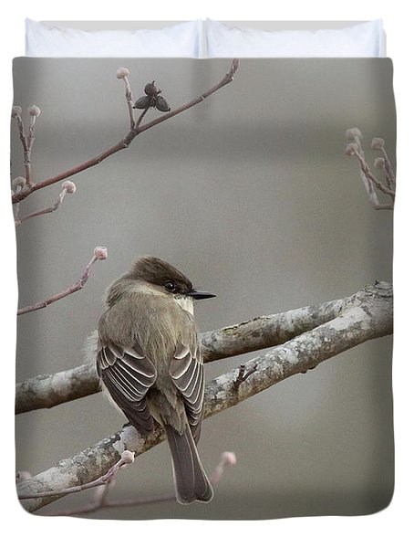 Bird - Eastern Phoebe - Very Contented Duvet Cover by Travis Truelove