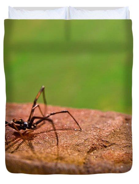 Black Widow Spider Male Duvet Cover by Douglas Barnett