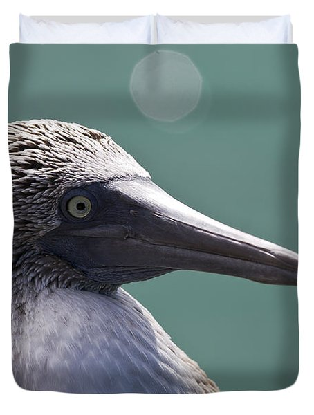 Blue Footed Booby II Duvet Cover by Dave Fleetham