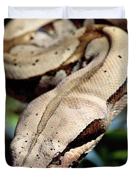 Boa Constrictor Boa Constrictor Duvet Cover by Claus Meyer