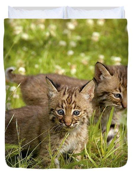 Bobcat Kittens Duvet Cover by John Pitcher