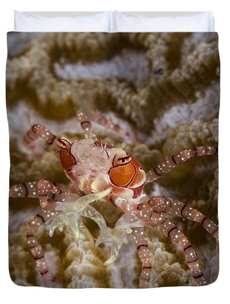 Boxing Crab In Raja Ampat, Indonesia Duvet Cover by Todd Winner