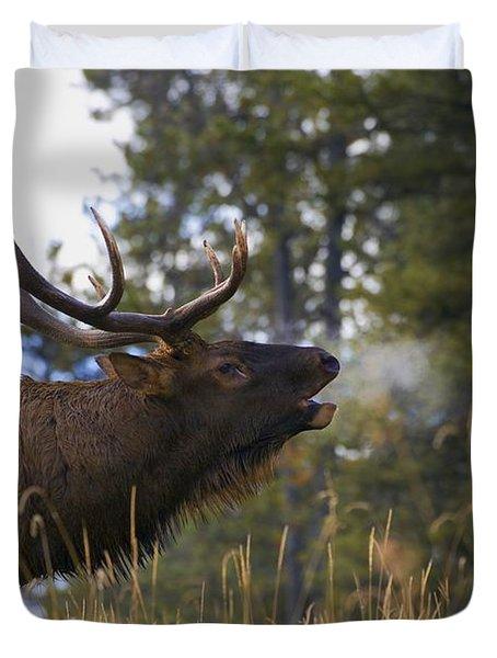 Bull Elk Bugling Jasper National Park Duvet Cover by Carson Ganci