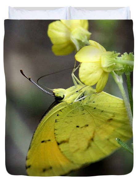 Butterfly - Yellow Sulphur On Yellow Duvet Cover by Travis Truelove