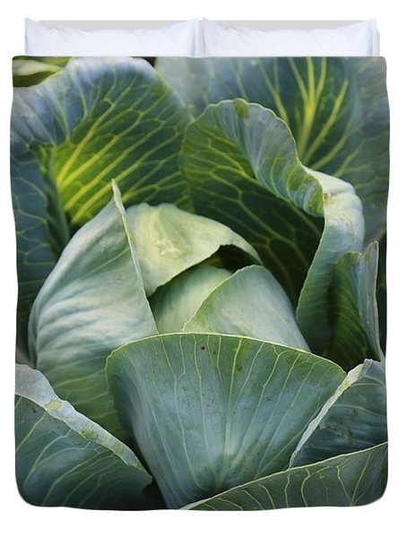 Cabbage in the Vegetable Garden Duvet Cover by Carol Groenen