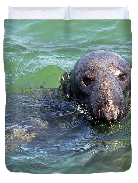 Cape Cod Harbor Seal Duvet Cover by Juergen Roth