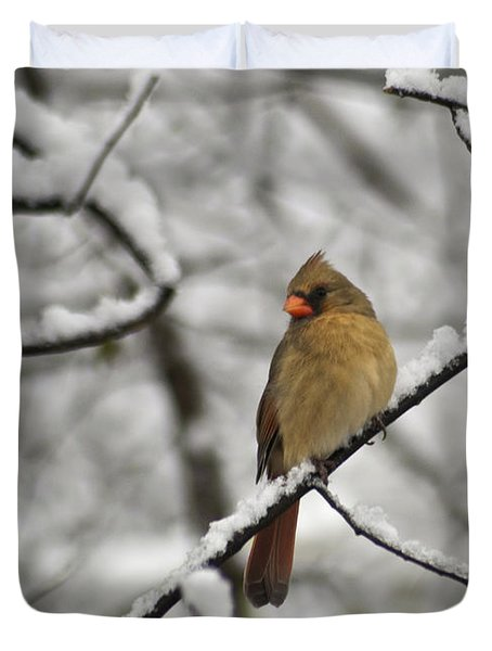 Cardinal Female 3652 Duvet Cover by Michael Peychich