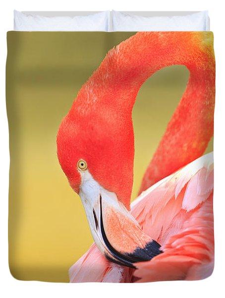 Caribbean Flamingo Phoenicopterus Rube Duvet Cover by Stuart Westmorland