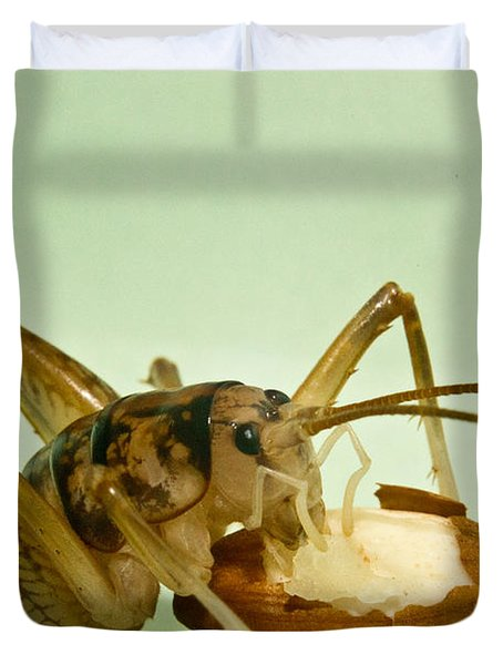 Cave Cricket Feeding On Almond 8 Duvet Cover by Douglas Barnett