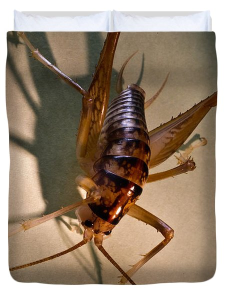 Cave Cricket In Shadow 2 Duvet Cover by Douglas Barnett